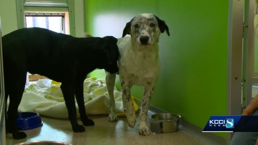 Pet rescue says Iowa forest used as dumping ground for unwanted dogs