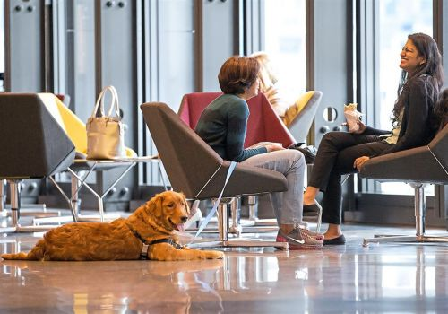 Pet events: Dogs at work, purse bash and recycled fashions