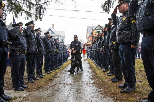 Young Massachusetts police dog laid to rest