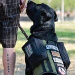 Veterans' Service Dogs Most Commonly Ease Anxiety