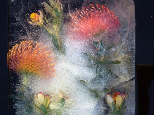 A man left his job and sold everything to buy a camera. Now he takes stunning photos of flowers trapped in ice that look like paintings