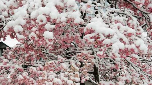 What's with this weather? It could be Dogwood Winter
