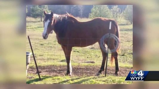 Wild boars responsible for horse attacks, SLED says