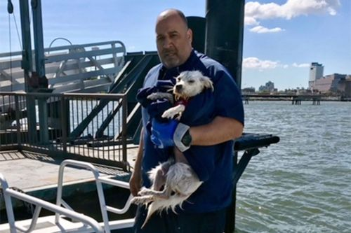Pooch rescued after falling into East River in Brooklyn