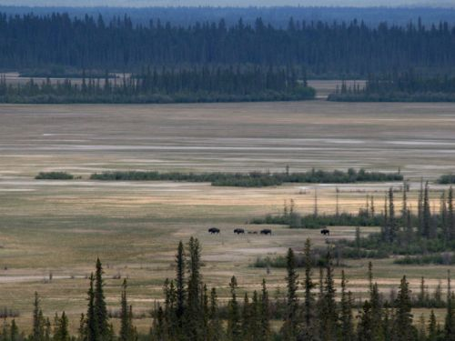 Almost every part of Canada's largest national park is deteriorating, a federal study says