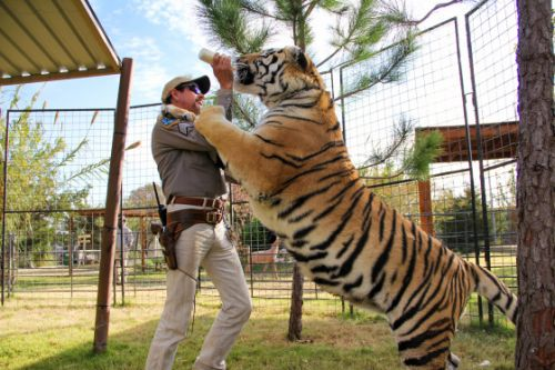 Here's What the Subjects of Netflix's Tiger King Are Up to Now