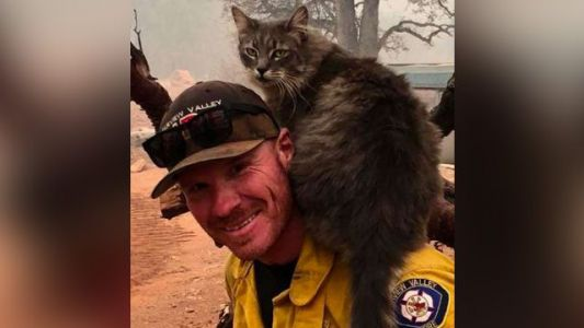 Firefighter rescues cat, and now she won't leave him alone
