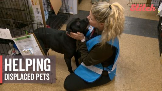 Volunteers care for abandoned pets found in the California wildfires