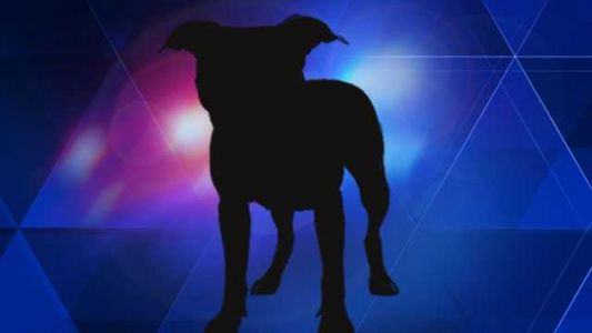 Health officials seek dog that bit person in Taneytown