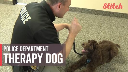 Police department hopes new therapy dog will help improve relationships between kids, officers