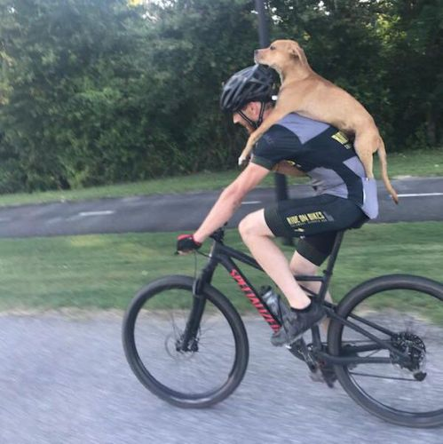 Cyclist finds injured puppy, carries pooch on his back to safety