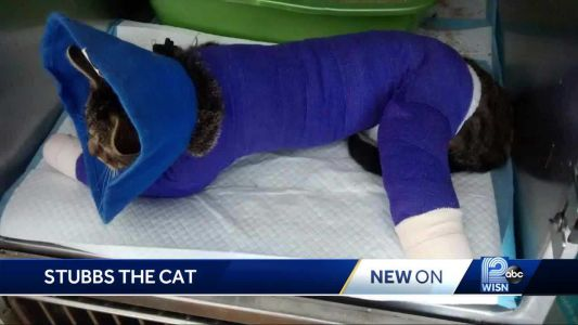 College engineering students give cat new legs