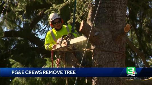 Upset residents watch PG&E cut down century-old tree in Nevada City