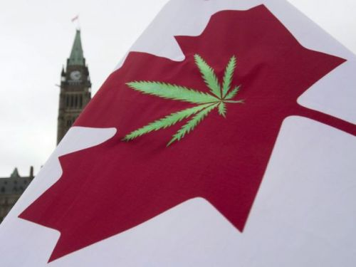 Postings for cannabis-related jobs 'growing rapidly' in Canadian labour market, numbers show