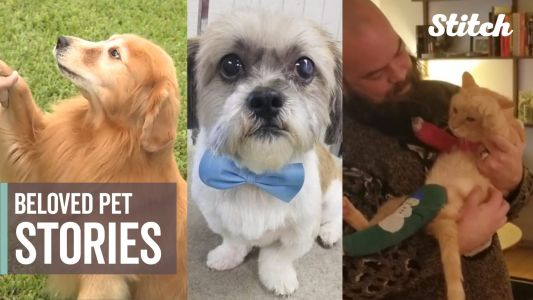 Warm your heart with 9 incredible stories for National Love Your Pet Day
