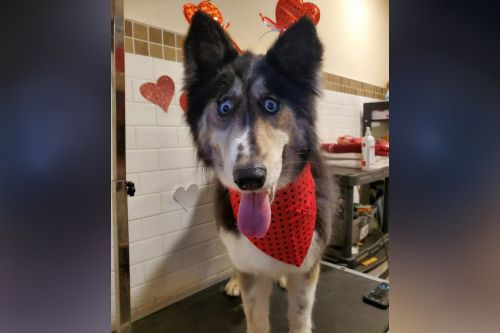 Jubilee the NJ shelter dog with 'weird' eyes adopted after story goes viral