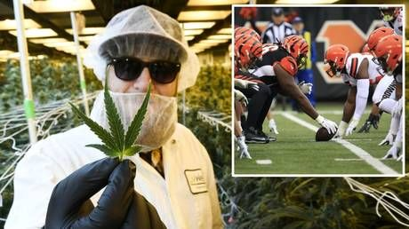 'Next year!' Pain of watching sport cannot be eased by marijuana, medical board rules - but NFL fan plans to petition again