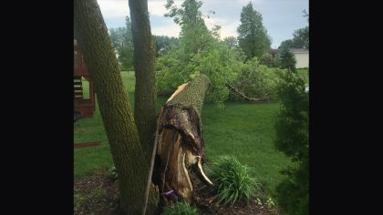 Storms Knock Down Trees, Power Lines West Of Twin Cities