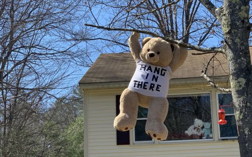 Seen more bears in your neighborhood lately? Here's why