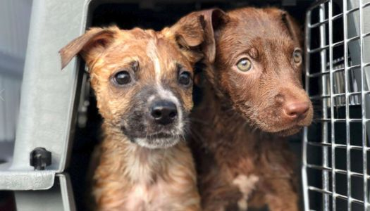 Donations help relocate dozens of rescued pets from Greenville to Wisconsin