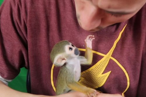 Meet the squirrel monkey that changed this veteran's life