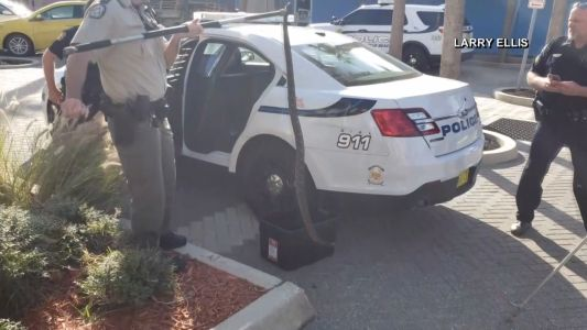 Florida police hold rattlesnake in the back of a patrol car