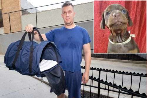 Queens man attempted to sneak dogs through JFK inside luggage: feds