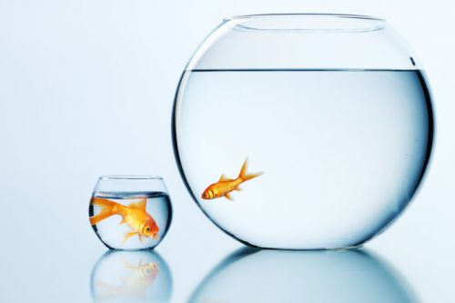Education study provides evidence of 'big-fish-little-pond' effect on students globally