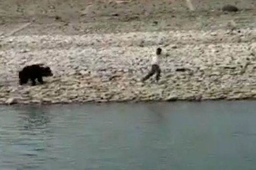 Bear mauls man as rescue workers desperately try to help