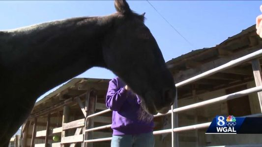 Horse rescue plans to start program to help veterans with PTSD