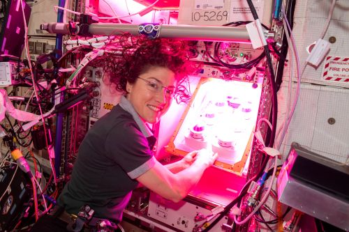 This NASA Experiment Shows Promise for Farm-Fresh Foods in Space
