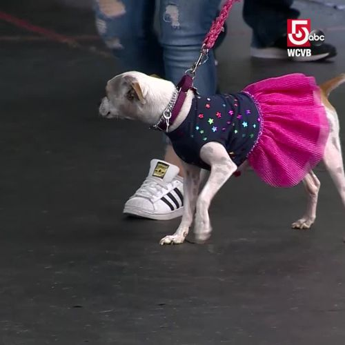 Dog show helps young epilepsy patients