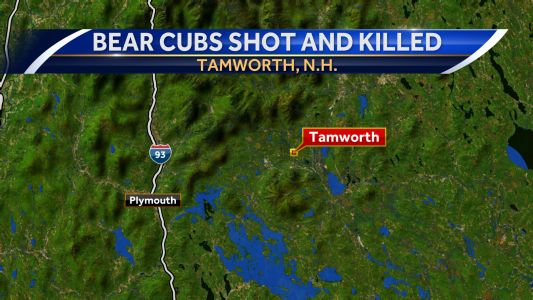 Tamworth property owner kills 3 bear cubs going after honey