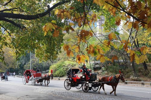 Judge rules in favor of De Blasio to keep horse carriages inside park