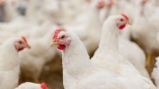 Poultry Workers Fear COVID-19 As Confirmed Cases Grow At Plants
