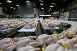 Recalls Of Hazardous Meat And Poultry Up 83 Percent Since 2013, Report Finds