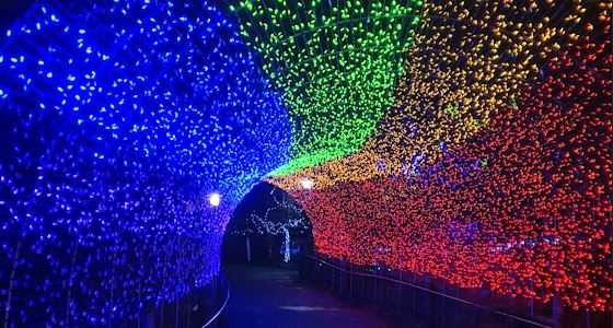 Cincinnati Zoo's lights voted best in nation for second year in a row