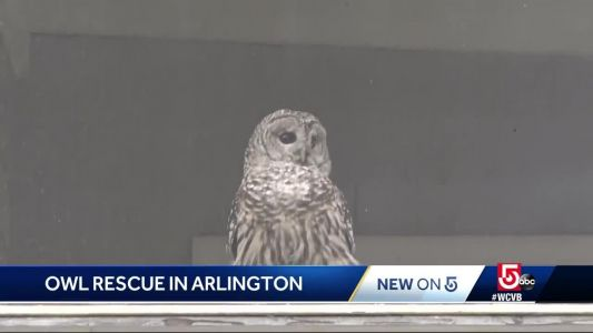 Police called after animal ends up in family's screened-in porch