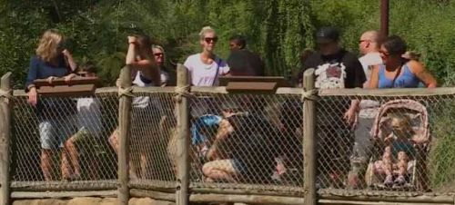Macy's hosting festival at Cincinnati Zoo with $1 admission