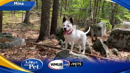 Mina is a 1-year-old Terrier mix who was transported from the South