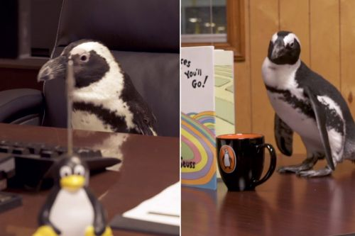 Penguin Random House hires penguin interns - and it was a total flop