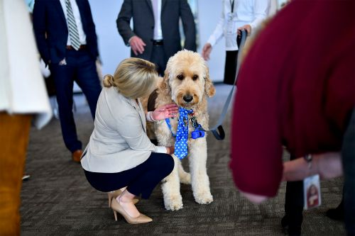 Therapy dogs visit stressed Congressional staffers at impeachment hearings
