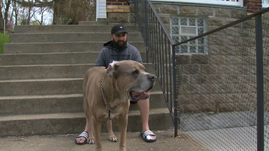 Pittsburgh man says he and his dog were attacked in Westmoreland County