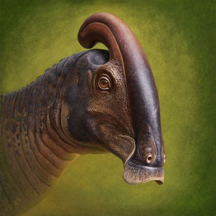 After Decades Of Disagreement, First New Skull Of Parasaurolophus Discovered In Nearly 100 Years Solves Mystery