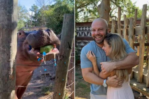 'Worst gender reveal' under fire for enlisting hippo at Texas zoo