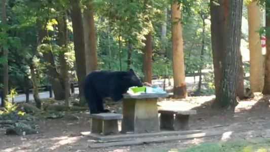 This bear crashed a viewer's picnic