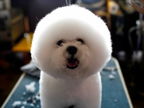 14 pictures of hilariously groomed pets that will make your day