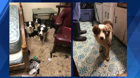 More than 30 dogs, parrot rescued from 'deplorable conditions' in Brown County