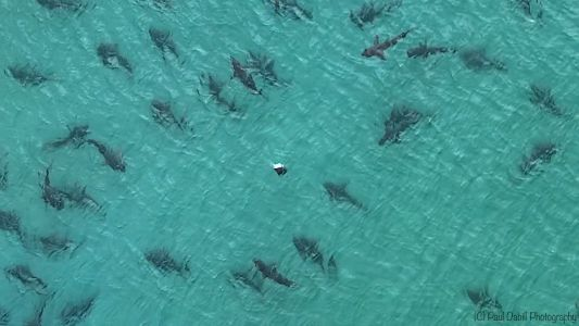 WHOA! Video shows massive school of blacktip sharks spotted off Florida beach