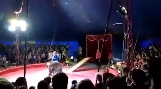 Terrifying video shows circus bear jumping off skateboard, attacking handler
